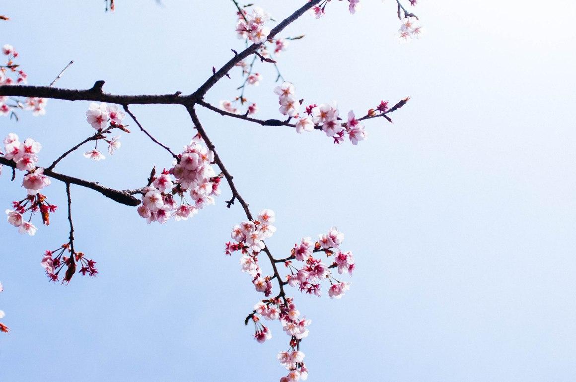 shinjuku_garden_003