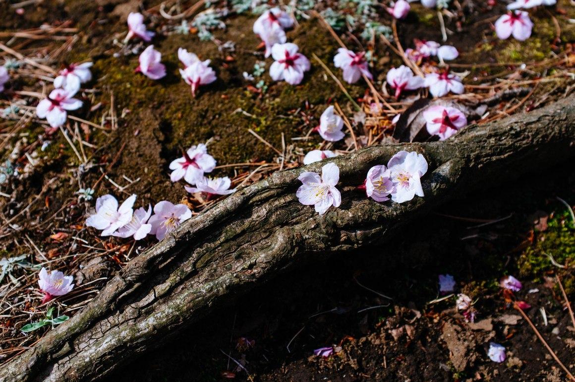 shinjuku_garden_014
