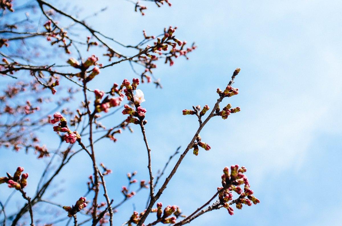 shinjuku_garden_017