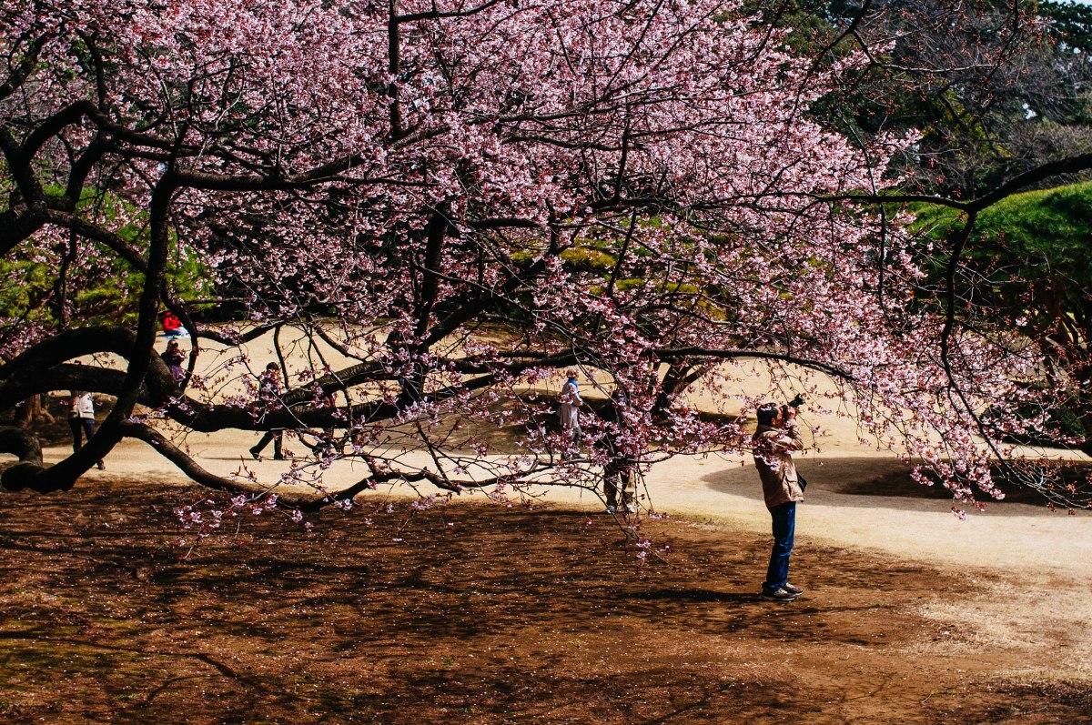 shinjuku_garden_018