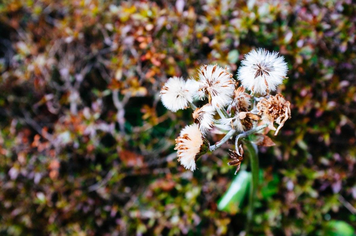 shinjuku_garden_022