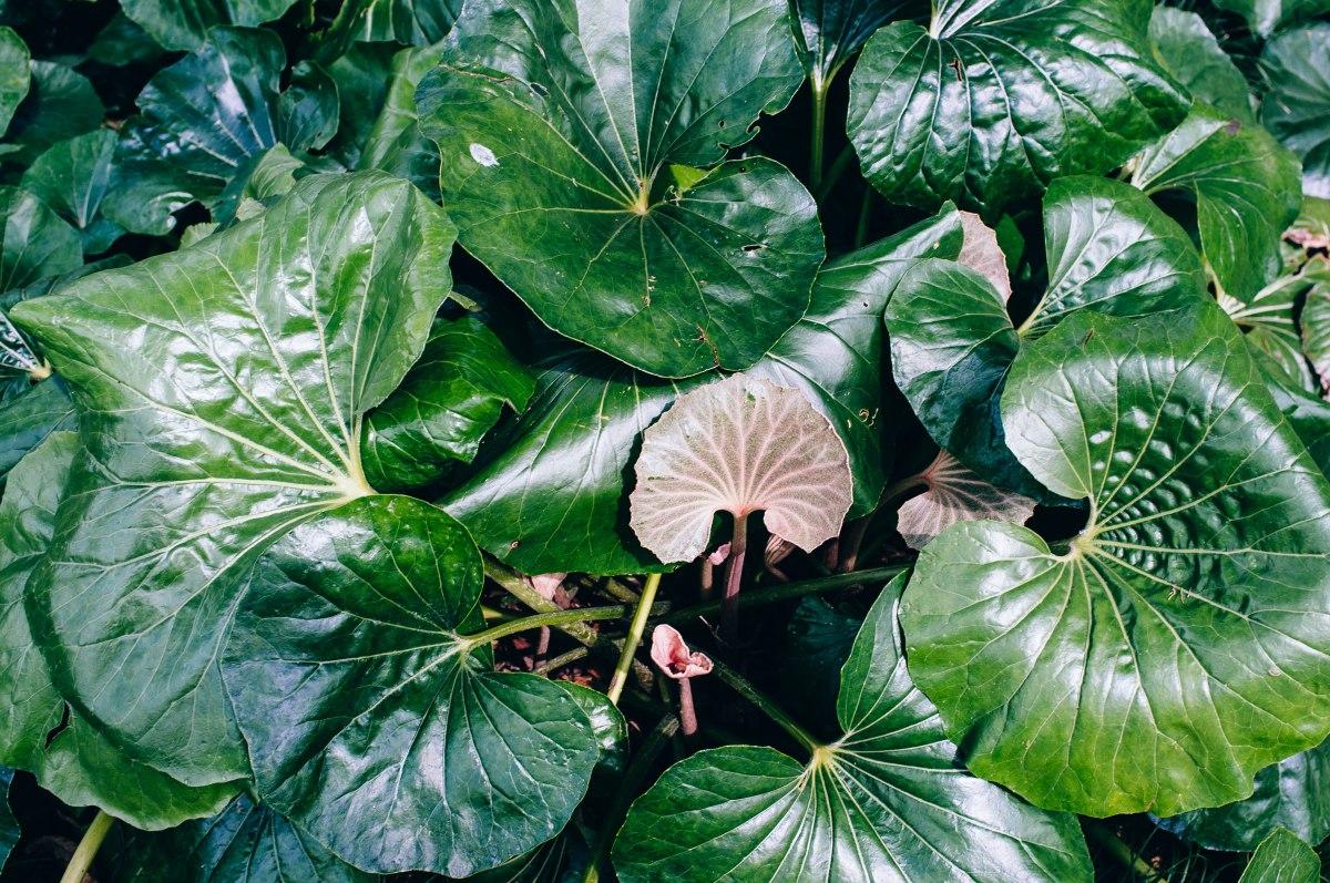 shinjuku_garden_023