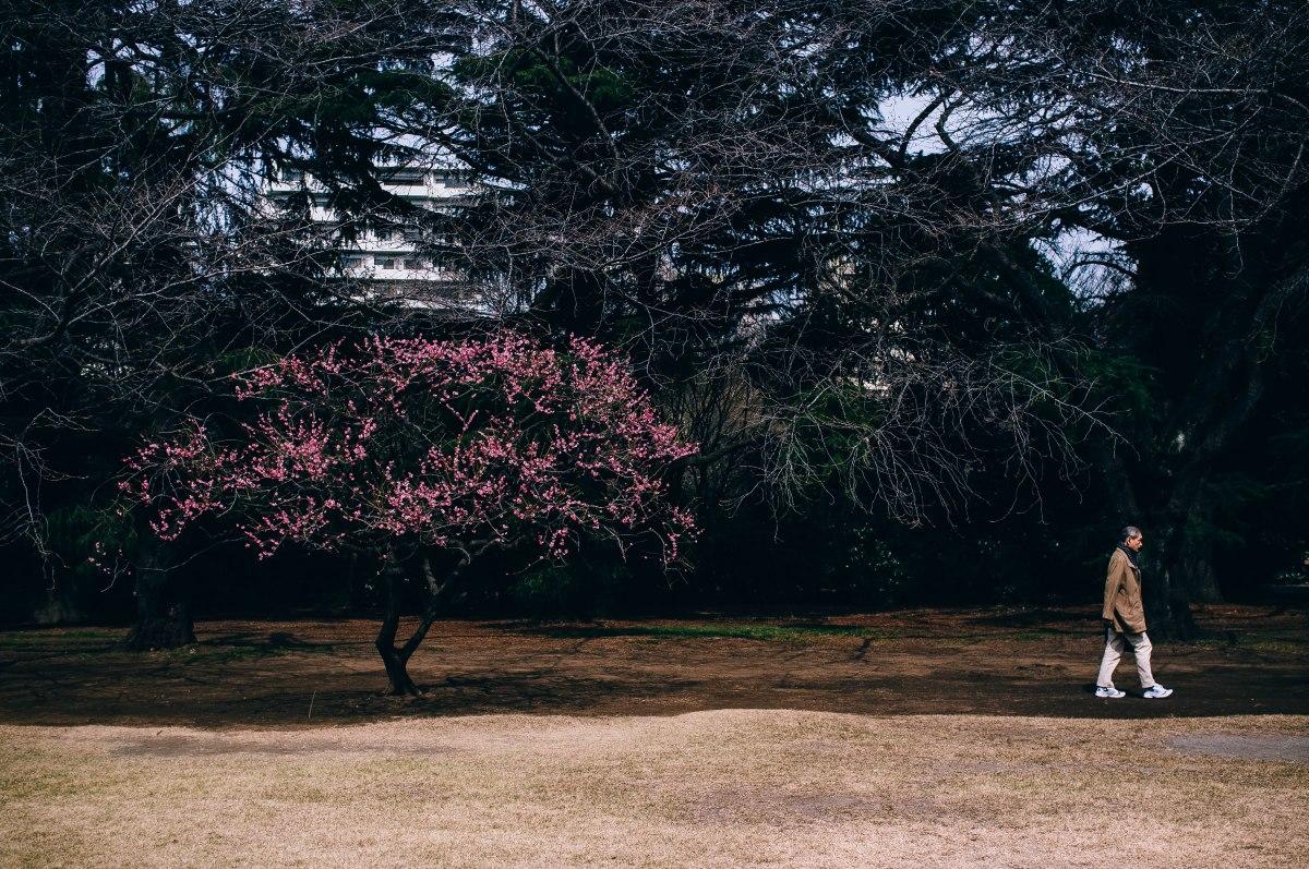 shinjuku_garden_024