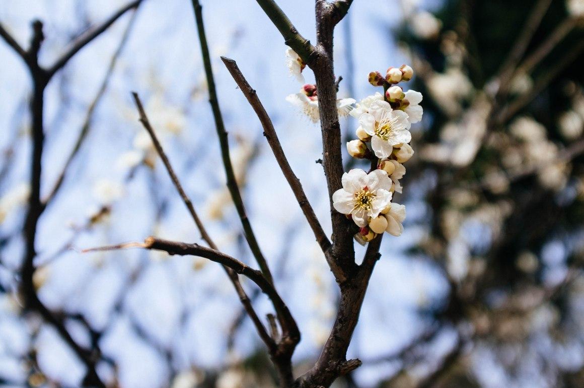shinjuku_garden_025