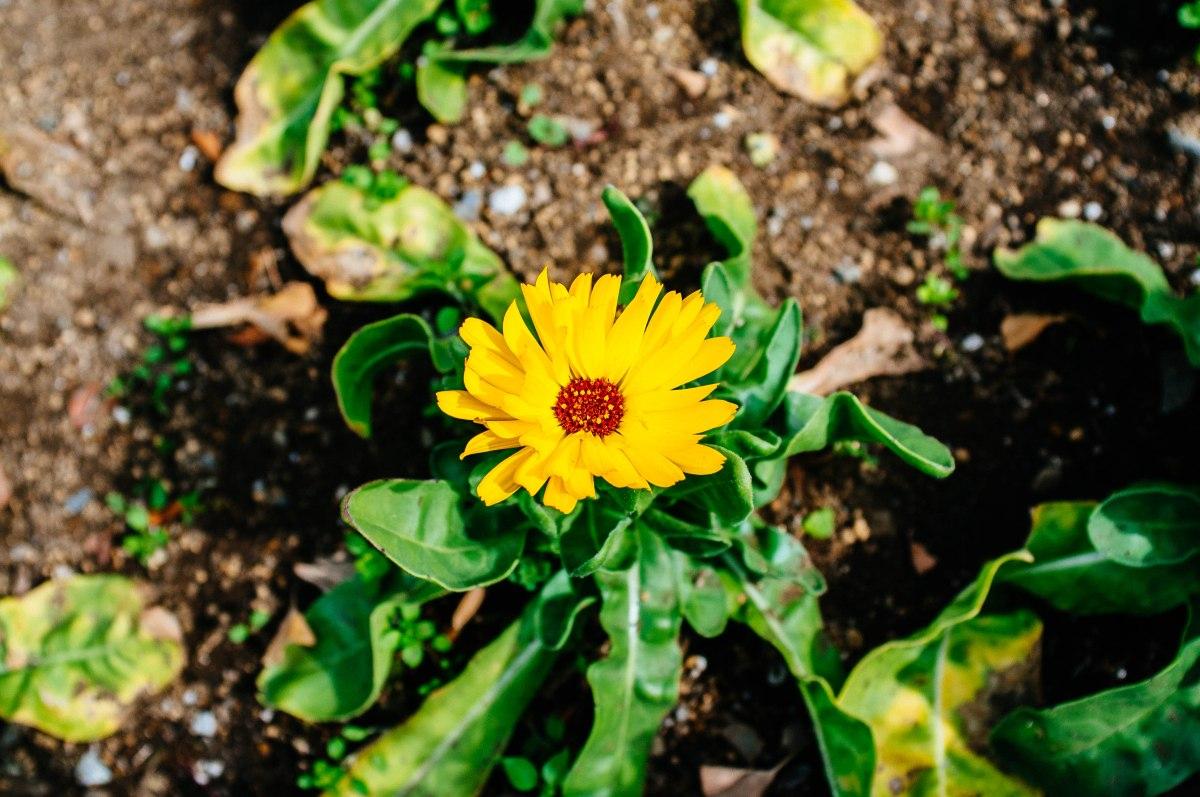 shinjuku_garden_028