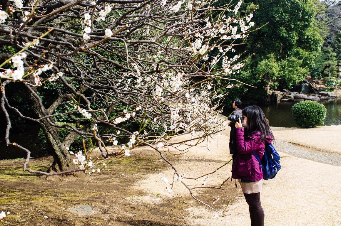 shinjuku_garden_030