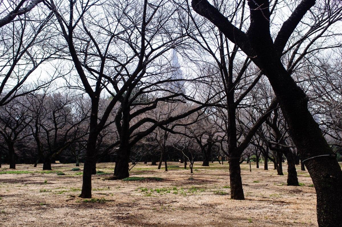 shinjuku_garden_035