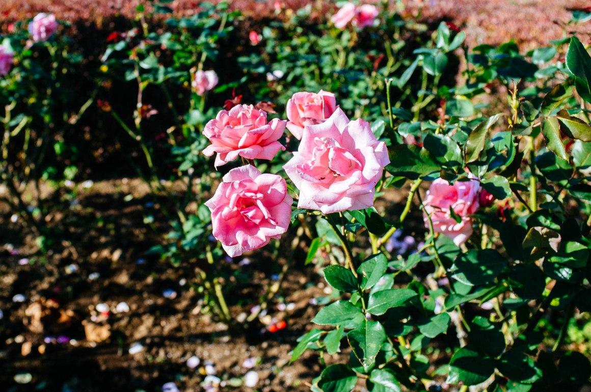 shinjuku_garden_047