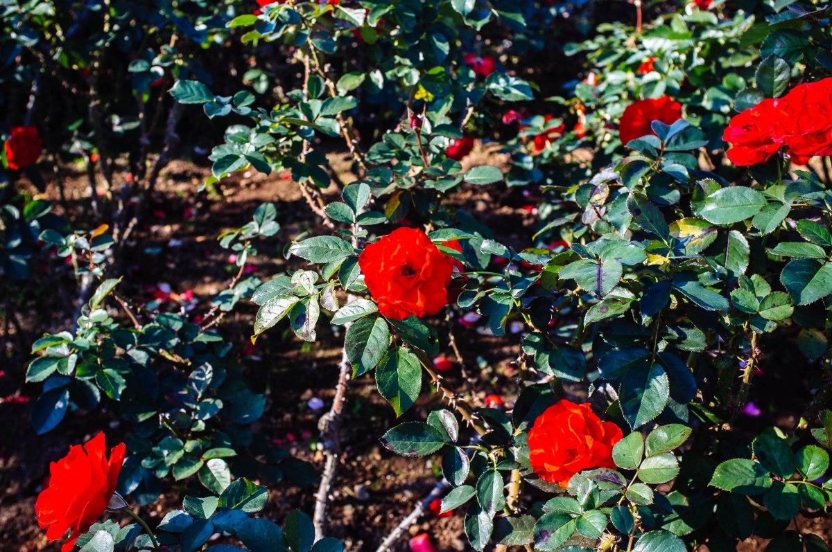 shinjuku_garden_048