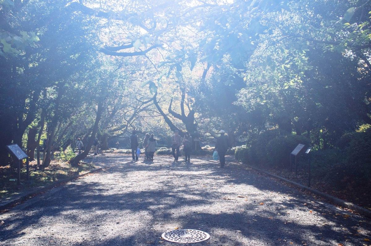 shinjuku_garden_049