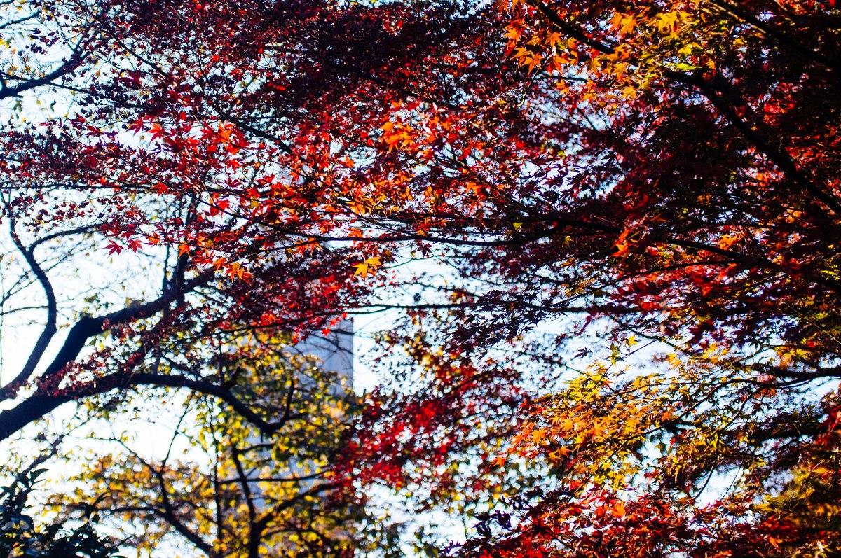 shinjuku_garden_056