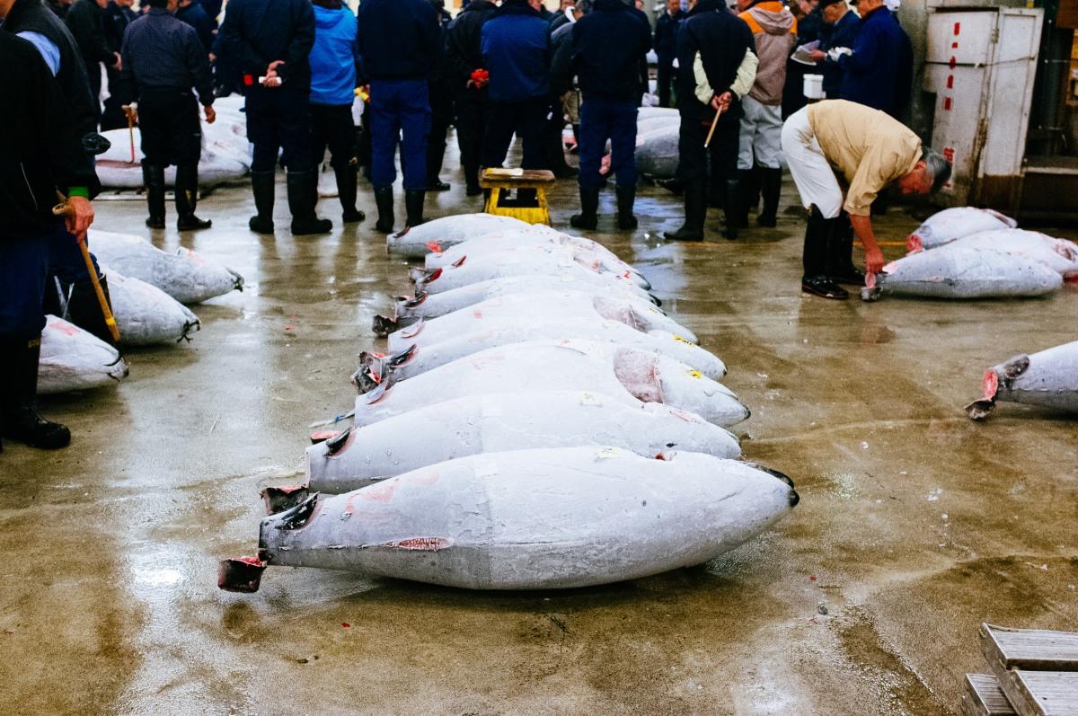 Tsukiji Fish Market 001-4
