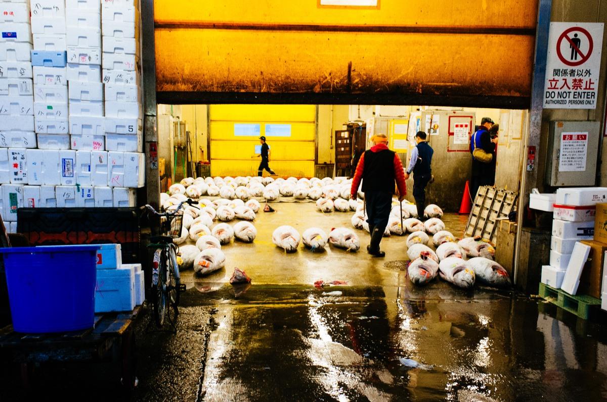 Tsukiji Fish Market 030